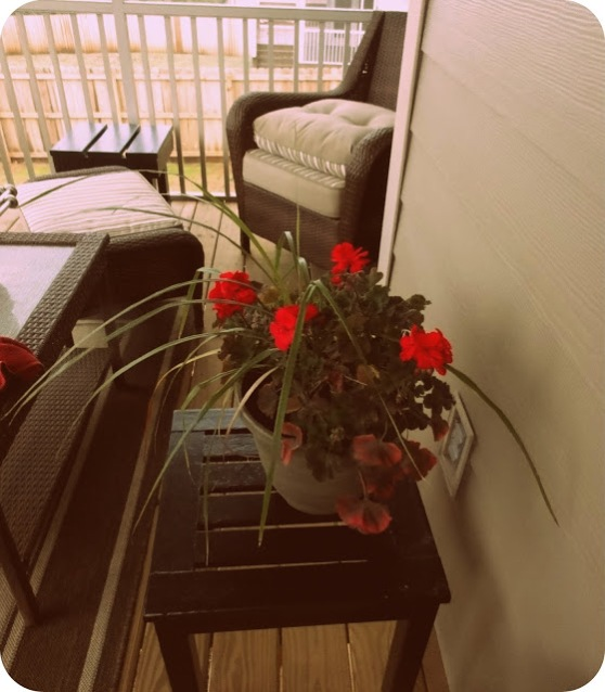 Geraniums on my mama's screened porch.
