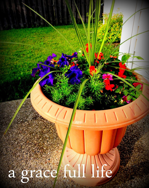 flower pot in summer