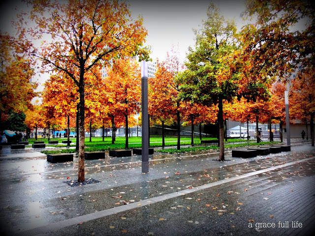 beautiful trees at the 9/11 memorial