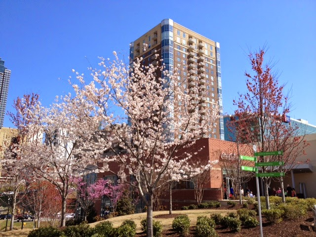 Beautiful spring trees in Atlanta
