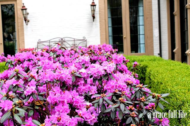 pink flowers John Hughes garden