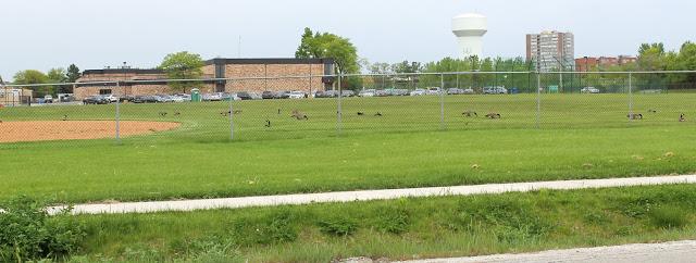 field across the street from Breakfast Club high school