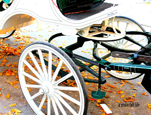 Horse Carriage Chicago