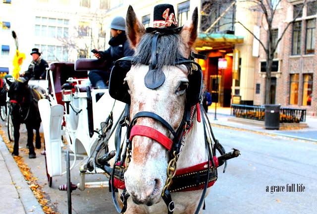 Horse Chicago