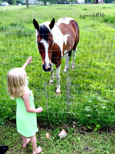Netflix, Horses, Ella