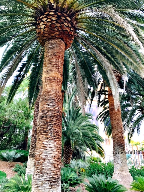 Palm Tree, Las Vegas, Travel