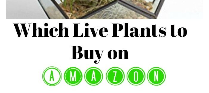 amazon, live plants, plants, gardening, indoor plants, affiliate